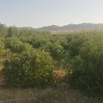 فروش باغ و زمین حسن آباد – دهچاه