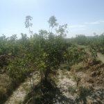 فروش تلمبه، زمین و باغ پسته در نی ریز