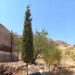 فروش ملک انجیر در نی ریز، کوه های قبله، با جاده آسفالت
